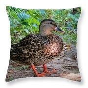 Mallard Miss Throw Pillow