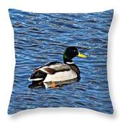 Mallard Swimming Throw Pillow