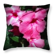 Mandevilla Pink Flowers  Throw Pillow
