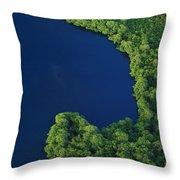 Mangrove Rhizophoraceae Stand, Bocas Throw Pillow