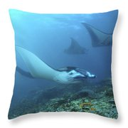 Manta Rays, Komodo, Indonesia Throw Pillow