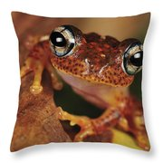 Mantellid Frog Boophis Tephraeomystax Throw Pillow