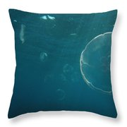 Many Moon Jellies Throw Pillow