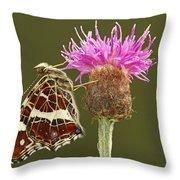 Map Butterfly Araschnia Levana Throw Pillow