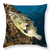 Map Pufferfish, Indonesia Throw Pillow