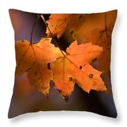 Maple Leaves In The Fall In Middlebury Throw Pillow