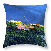Maple Leaves On Mossy Rock Throw Pillow