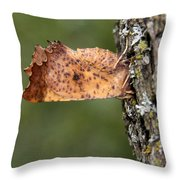 Maple Spanworm Moth Throw Pillow