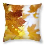 Maple Tree In Autumn Throw Pillow