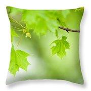Maple Tree Throw Pillow