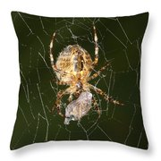 Marbled Orb Weaver Spider Eating Throw Pillow
