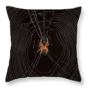 Marbled Orb Weaver Spider Throw Pillow