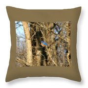 March Bluebird Throw Pillow