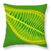 Marine Diatom Podocystis Spathulata Throw Pillow