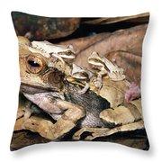 Marsupial Frog Gastrotheca Ovifera Throw Pillow