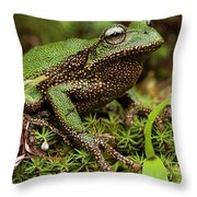 Marsupial Frog Gastrotheca Sp, A Newly Throw Pillow
