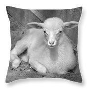 Marys Little Lamb... Or Kid In Black And White Throw Pillow