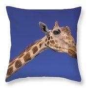 Masai Giraffe, Serengeti, Africa Throw Pillow