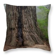 Massive Redwood And Fog Throw Pillow