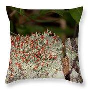Matchstick Lichen Throw Pillow