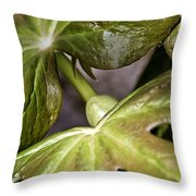 May Apple Throw Pillow