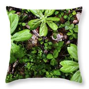 Mayapples In Forest Throw Pillow