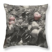Mcintosh Apples In Partial Color Throw Pillow