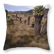 Meadows And Groundsel Trees, Mt Throw Pillow