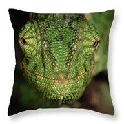 Mediterranean Chameleon Chamaeleo Throw Pillow