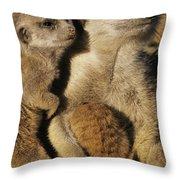Meerkat Pups With Their Caretaker Throw Pillow