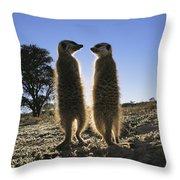 Meerkats Start Each Day With A Sunbath Throw Pillow