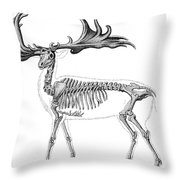 Megaloceros, Cenozoic Mammal Throw Pillow
