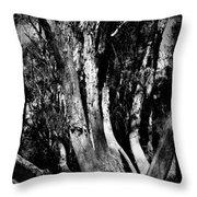 Melaleuca Tree Throw Pillow