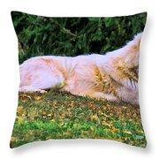 Menominie Park Grey Wolf Throw Pillow