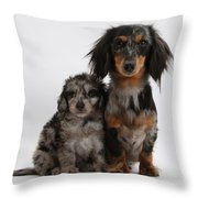 Merle Dachshund And Doxie Doddle Pup Throw Pillow
