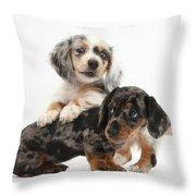 Merle Dachshund Pups Throw Pillow