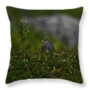 Merlin Grounded Throw Pillow
