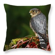 Merlin In The Rain Throw Pillow
