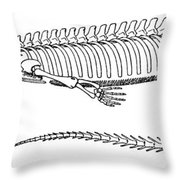 Mesosaurus Brasiliensis Throw Pillow by Science Source