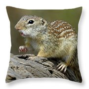 Mexican Ground Squirrel Throw Pillow