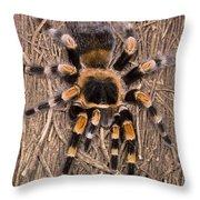 Mexican Red-legged Tarantula Throw Pillow