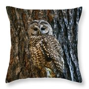 Mexican Spotted Owl Camouflaged Against Throw Pillow