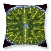 Micrasterias Denticulata Throw Pillow