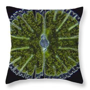 Micrasterias Sp. Algae Lm Throw Pillow