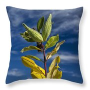 Milkweed Pods Against A Blue Sky Background Throw Pillow