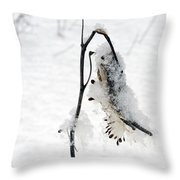 Milkweed Seed Pod In Winter Throw Pillow