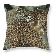 Mimic Octopus Head, North Sulawesi Throw Pillow