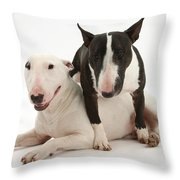 Miniature Bull Terrier Bitch, Lily Throw Pillow by Mark Taylor