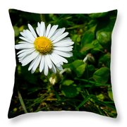 Miniature Daisy In The Grass Throw Pillow