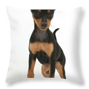 Miniature Pinscher Puppy Throw Pillow
